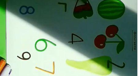 Sayılarla Meyve Etkinliği